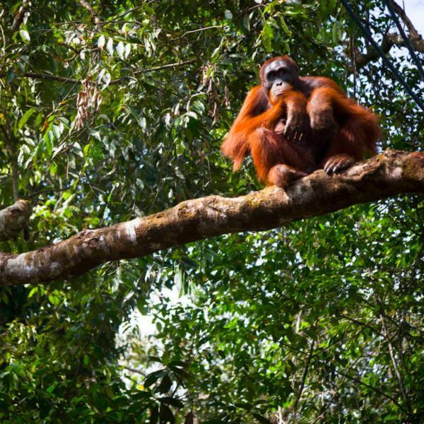 Wildlife holiday Borneo