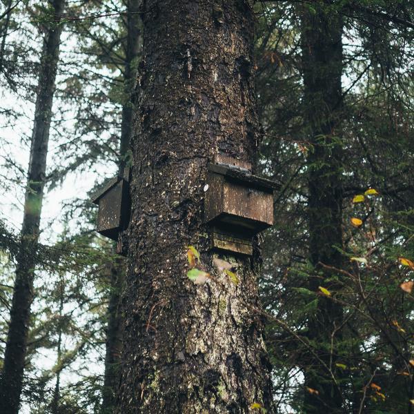Bat box in the trees